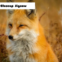 Fox Closeup Jigsaw